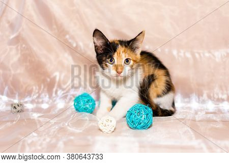 Cute Little Tricolor Kitten, Playing With Balls On A White Background.