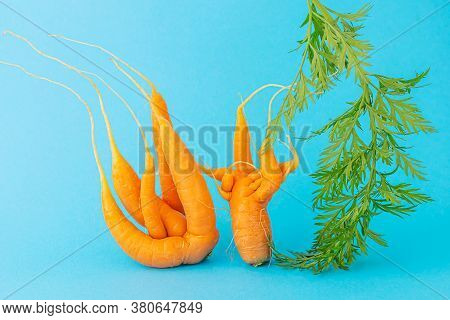 Strange Funny Shaped Carrots On A Blue Background. Vegetable Crops Concept. Minimalism, Copy Space.