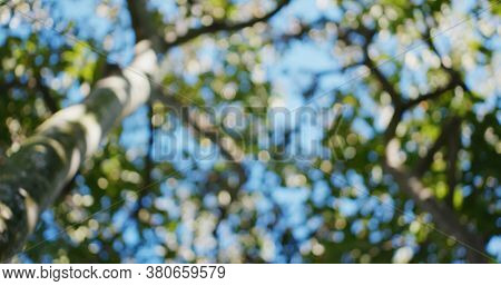 Blur view of green tree and sunny sky