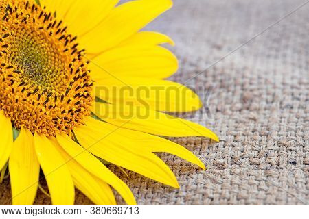 Sunflower On Burlap Close-up, Summer Background, Flower Rustic