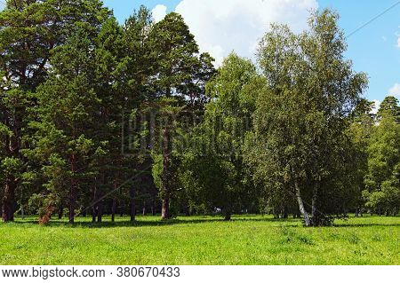 Picturesque Nature Landscape With Different Old Trees And Grass With Wild Blooming Flowers In The Fo