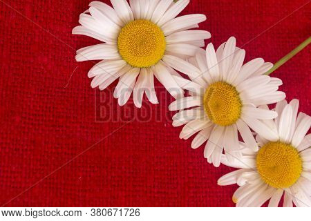 Chamomile On Red Burlap Background, Texture Of Coarse Natural Fabric