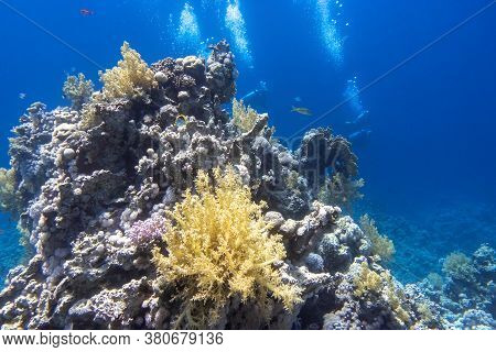 Underwater Diving In Red Sea. Divers Behind The Coral Reef In Clear Blue Water, Deep In The Ocean. A