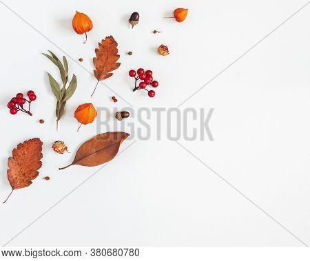 Autumn Composition. Physalis Flowers, Eucalyptus Leaves, Rowan Berries On White Background. Autumn,