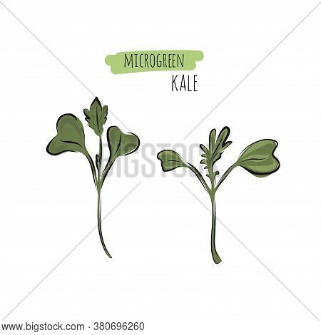 Hand Drawn Kale Micro Greens. Vector Illustration In Sketch Style Isolated On White Background