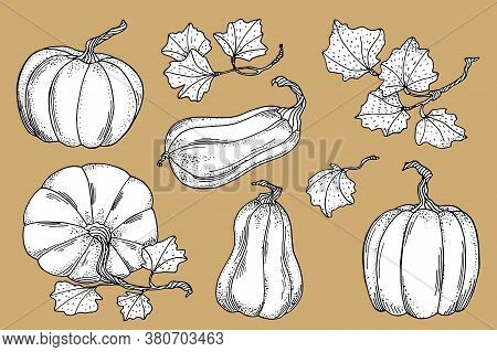Outline Vector Pumpkins With Leaves Collection. Hand Drawn Black Contour With White Fill Gourds Isol