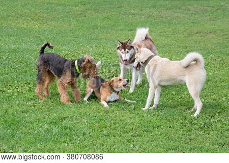Four Dogs Are Playing On A Green Grass In The Summer Park. Pet Animals.