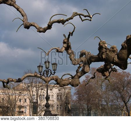 The Quaint Branches Of Weeping Mulberry Against The Backdrop Of City Buildings, Lanterns And Other T