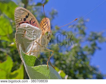 A Close-up Butterfly Against A Backdrop Of Greenery And Blue Sky.