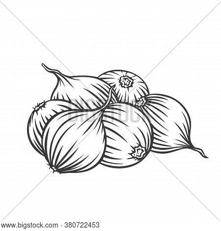 Pile Of Onion Bulbs Engraved Vector Illustration. Hand Drawn Onion Vegetables, Farm Product.
