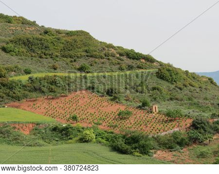 Agricultural Landscape With Vineyard And Arable Land In Sunny Summer Day, Navarra, Spain
