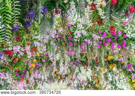 Beautiful flowers background. Beautiful flowers in the garden.