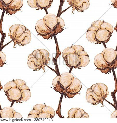 Vintage Cotton Flower Plant Sepia Sketch Seamless Pattern Texture Background