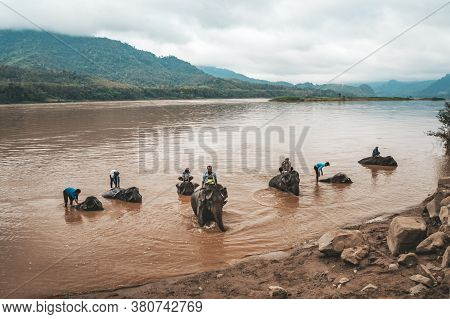 Laos. Luang Prabang - 15 January 2019: Elephant Bathing In The River. Elephant Drivers Wash, Bathe T