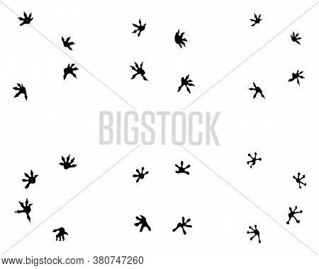Black Footprints Of Lizard On A White Background