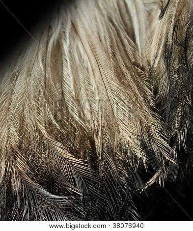 Emu Feathers