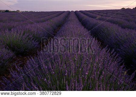 Provence, Lavender Field France, Valensole Plateau, Colorful Field Of Lavender Valensole Plateau, Pr
