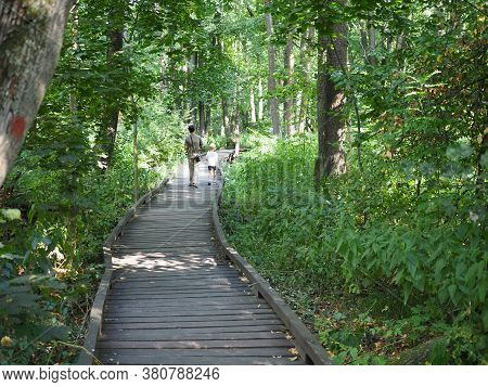 Ecotourism Concept. Father And Son Walk On A Wooden Bridge Over A Swamp In The Forest