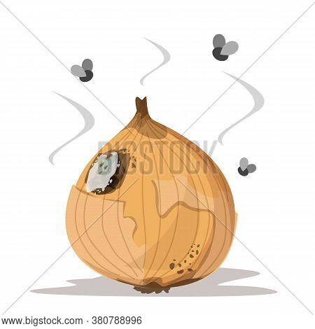 Fresh Onion Becomes Rotten Vector Isolated. Rotting Product, Mold On The Onion, Damaged Meal. Insect