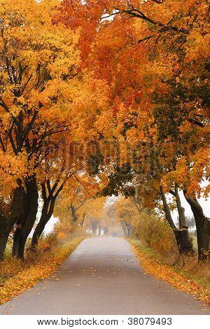 Autumn mapleroad.