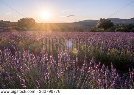 Ardeche Lavender Fields In The South Of France During Sunset, Lavender Fields In Ardeche In Southeas