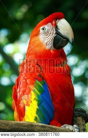 Red Macaw Parrot Sitting On The Twig With Blurry Natural Background