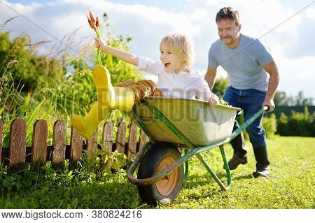Happy Little Boy Having Fun In A Wheelbarrow Pushing By Dad In Domestic Garden On Warm Sunny Day. Ac