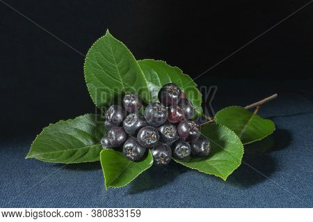 Blackenning Rowanberry With Green Sheet On Table With Dark Background. Ripe Berries At Year Term Of