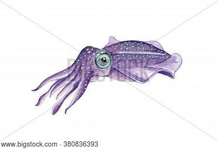 Sea Cuttlefish Watercolor Illustration. Hand Drawn Underwater Creature. Ocean Wildlife Tropical Sepi