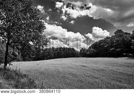 Rural Landscape With Farmland And Forest During Summer In Poland, Black And White