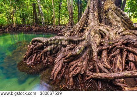 Tropical Mangrove Green Forest Clear Water