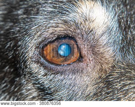 One Eye Of The Dog Is Photographed At Close Range. Domestic Dogs. Animal Eye. Puppy. Animal World. L