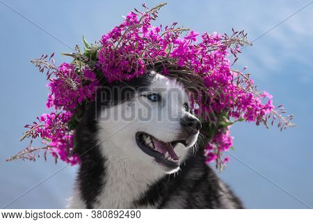 Close-up Dog Portrait With Floral Crown On Blue Water Background. Dog With Wreath Of Pink Flowers. S