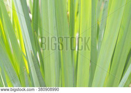 Macro Shot Green Flower. Agriculture Concept Design. Beautiful Flower In Tropical Garden. Green Flow