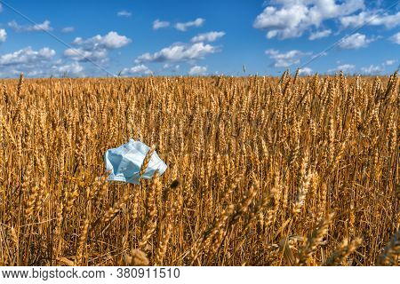 Disposable Mask On A Beautiful Barley Field. The Problem Of Disposal Of Hygiene Products After The C