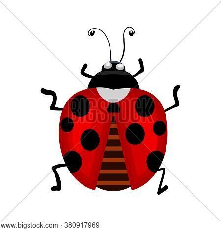 Ladybird Isolated On White Background. Ladybug Small Icon. Red Lady Bug Sign. Top View Of Cartoon Bl