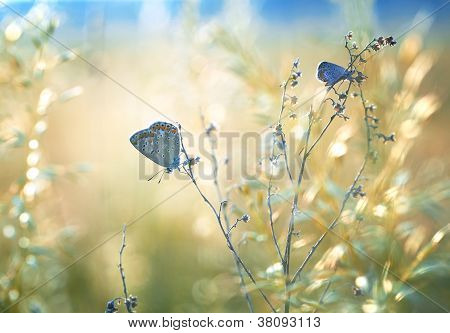 Field with butterfly