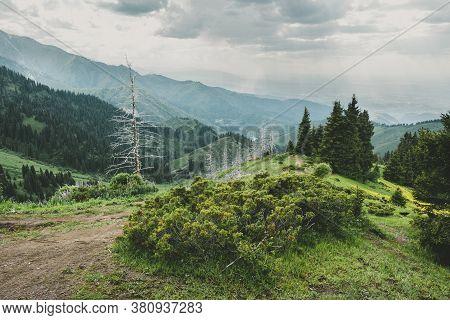Mountain Landscape With Dead Trunks Of Fir, Almaty, Kazakhstan, Zailiysky Ridge Alatau, Almaty, Kaza