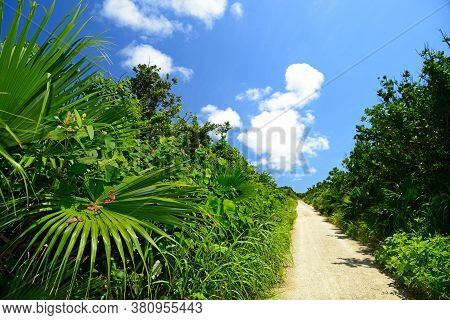 Summer Sky And The Green Of The Okinawa Subtropical Plants