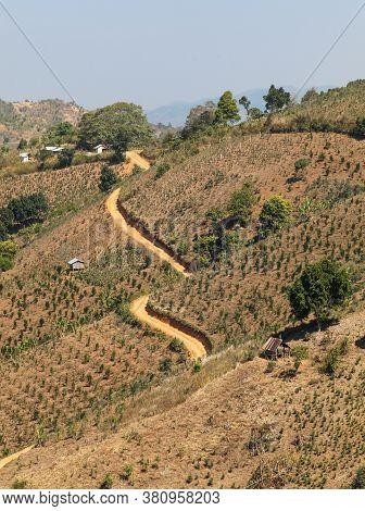 Hillside Farmland Near Kalaw In Myanmar (burma). This Area Is Popular For Trekking With Overseas Tou