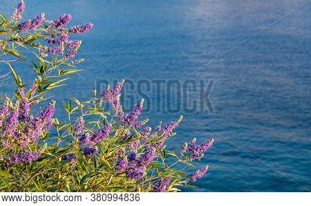 Purple Lavender Plant, Over Blur Kea, Tzia Island Sea Background.