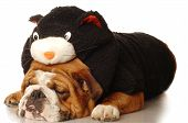 english bulldog wearing a black cat costume poster
