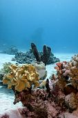 coral reef with soft and hard corals and sea sponge on the bottom of red sea in egypt poster