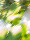 Abstract blur vegetative background from green leaves poster