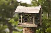 Rustic Birdhouse Amongst Pine Trees in the forest poster
