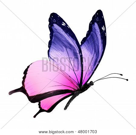 Color Butterfly Flying, Isolated On White