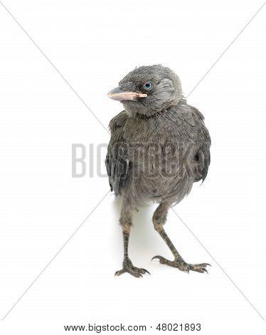 Bird On A White Background