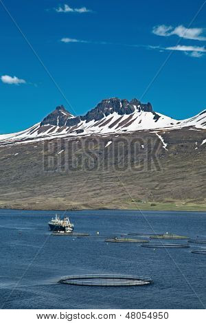 aquaculture salmon fishing farm enclosure and boat in fjord Iceland sea fish farming in round net fishing industry Atlantic salmon