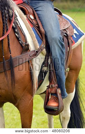 Jeans and horse