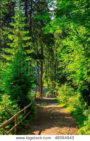 Narrow Path In Forest With Small Wooden Fence Turn To The Right In The Backlight